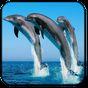 Golfinho Parede Animado