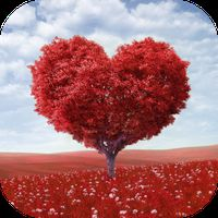 Ícone do apk Imagens com Recados de Amor