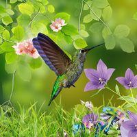 Hummingbirds wallpaper 아이콘