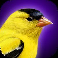 iBird Yard Plus Guide to Birds Simgesi