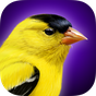 iBird Yard Plus Guide to Birds 7.2.237