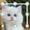Cat Pattern Lock-