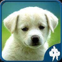 Animal Jigsaw Puzzles icon