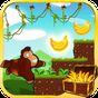 Jungle Monkey running