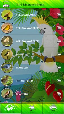 Image 5 of Bird Tones