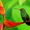 Burung Wallpaper Hidup