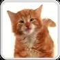 CAT LICKS LIVE WALLPAPER FREE