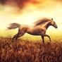 Imagens do Cavalo Parede Papel