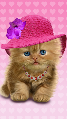 imagen baby cat cute live wallpaper 21gal