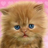 Baby katze, süß live wallpaper Icon