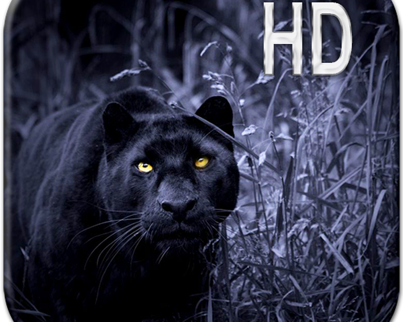 Black Panther Live Wallpaper Apk Free Download App For Android