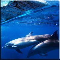 Иконка Дельфины со звуком живые обои