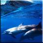 Дельфины со звуком живые обои