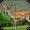 Deer Sniper: Hunting Game