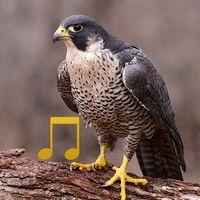 Vogelgeluiden icon