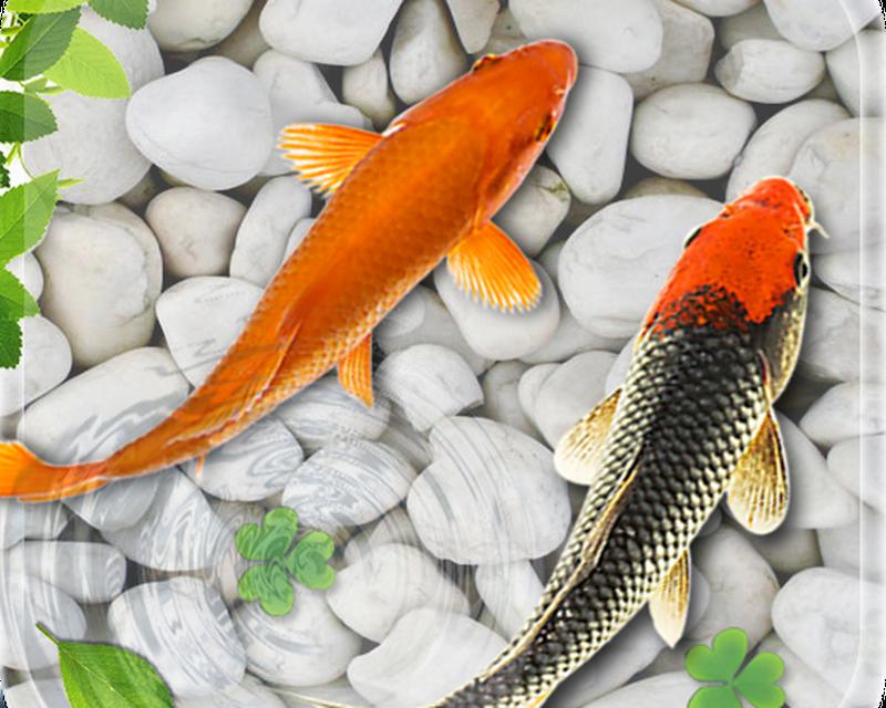Poisson Vivre Fond D Ecran 2018 Aquarium Koi Fond Apk Telecharger App Gratuit Pour Android