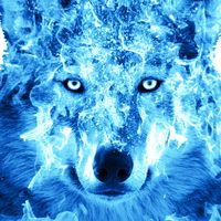 Ice Fire Wolf Wallpaper icon