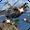 Helicopter Fighting Gunship Strike  APK