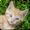 Jogos de Gatos e Gatas fofos
