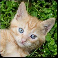 Ícone do apk Jogos de Gatos e Gatas fofos